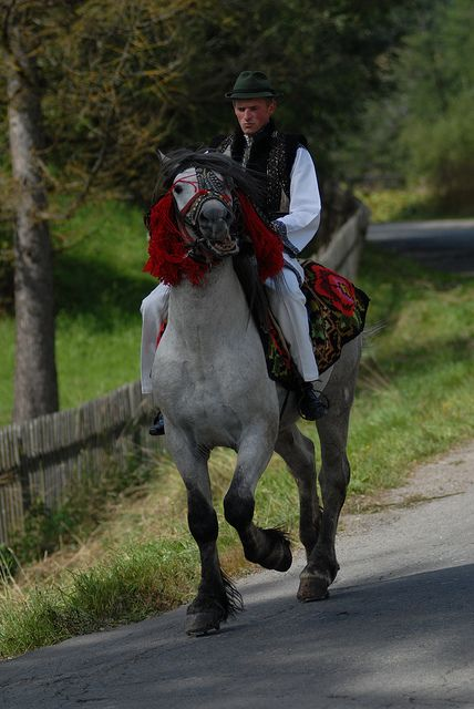 Ride a #horse! You will find #stables and #nice #horses all over #Romania. Ask arround.
