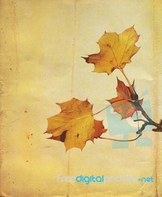 Autumn LeavesAutumn Leaves, Leaves Stockings, Leaves Image
