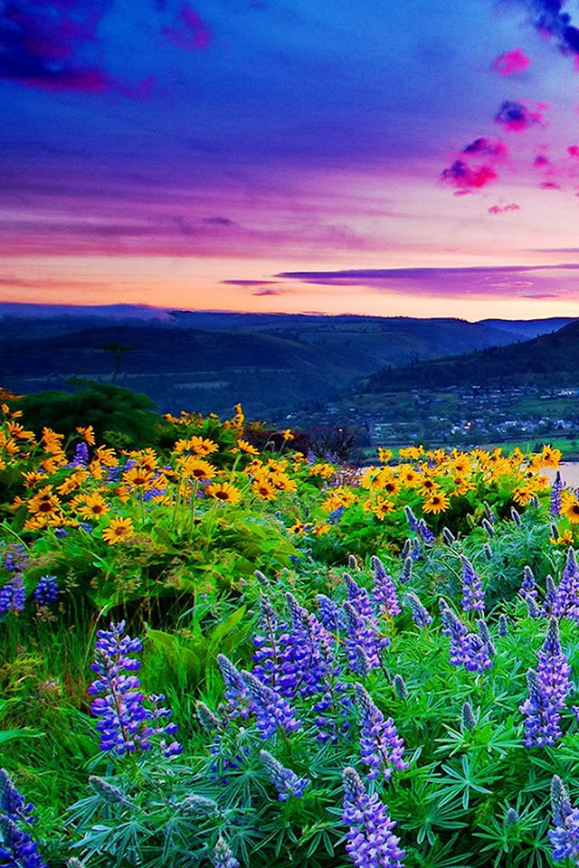 Lush Landscape Wallpaper Spring Iphone