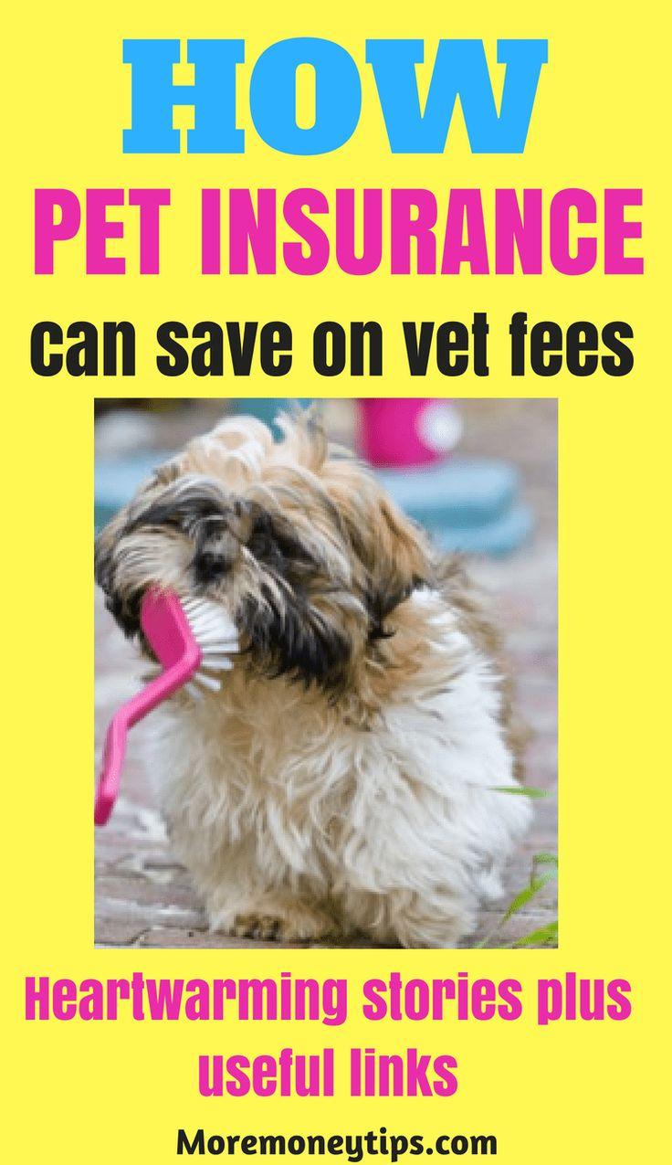Pet insurance best ways to save pet insurance pet