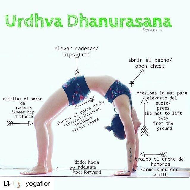 image by  Urdhva Dhanurasana  Upward Bow Pose or Chakrasana  Wheel Pose on @yogaalignment . .  #yogatips with @yogaflor   #urdvhadhanurasana  también conocida como la rueda otorga muchos beneficios a nuestro cuerpo:  La postura de la rueda fortalece y alarga las vértebras lo que aumenta la elasticidad y la flexibilidad de la columna vertebral. A medida que envejecemos nuestra columna vertebral se comprime. Sin embargo muchas posturas de yoga en particular  la rueda crean el espacio necesario…