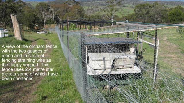Possum-proofing veg garden by building Floppy Fences. There goes all the romantic ideas of an ornamental veg garden... will probably look more like a prison.