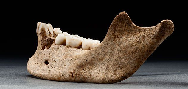 Starving Settlers in Jamestown Colony Resorted to Cannibalism-  New archaeological evidence and forensic analysis reveals that a 14-year-old girl was cannibalized in desperation