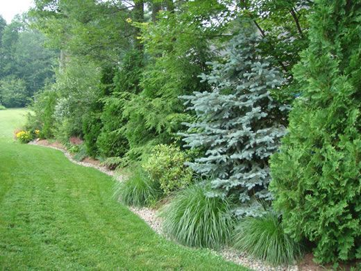 Using evergreens along a border is a natural way to block noise, an unsightly view or to obstruct others from looking into your yard:
