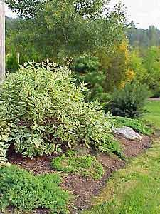 How-To Project: Planning a Low-Maintenance Landscape