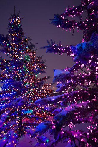 Snowy, lit trees at night