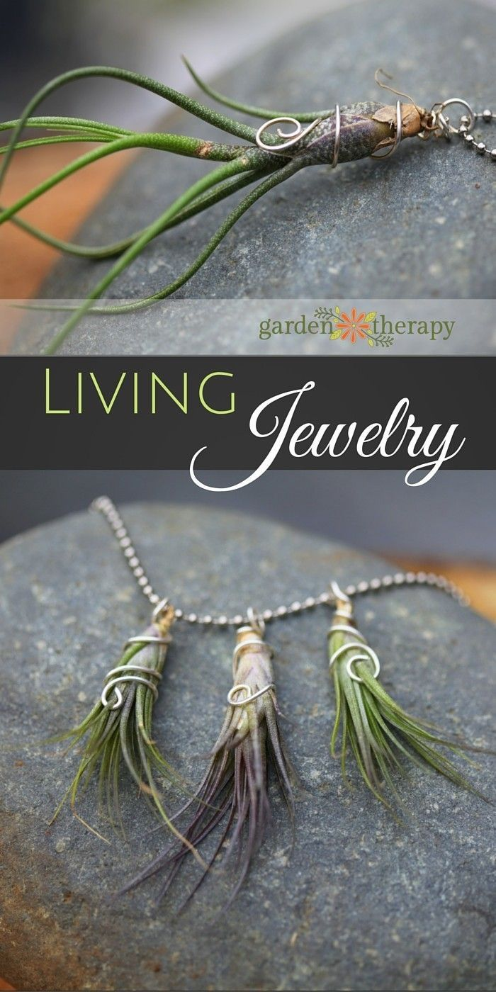 Gorgeous living jewelry made from air plants and sterling silver wire. You don't have to love all-things-green to appreciate the portability of air plants and the possibilities for what you can make with them. Air plants, or Tillandsia, are epiphytes, which means that they can grow and thrive without soil.