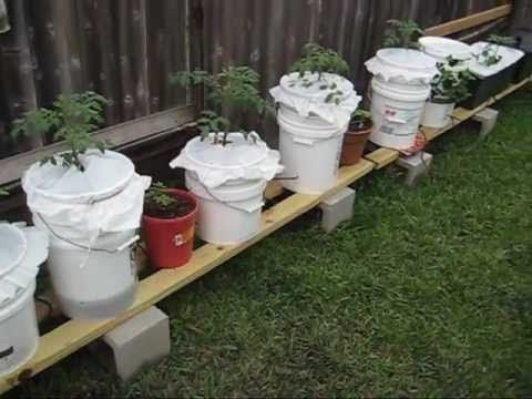 Richard Has Added Eight Containers Of Various Sizes And Shapes To His Self Watering Container