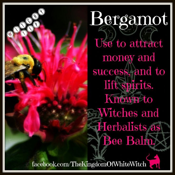 #bergamot #beebalm #herbs #herbalism #botanical #ritual #spell #magick #magic #witchcraft #witchyway #whitewitch #witch #pagan #conjure #wicca #wiccan #magician #medical #doctrine #craft #witchyshop #kitchen #baths #incense #health #thekingdomofwhitewitch #witchytip #witchyherbs
