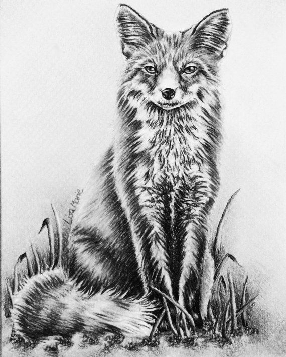 Fox Coloring Book Page Adult Pages