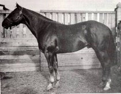 Wimpy P-1 owned by the King Ranch, Kingsville, Texas, earned the first number in the American Quarter Horse Association.