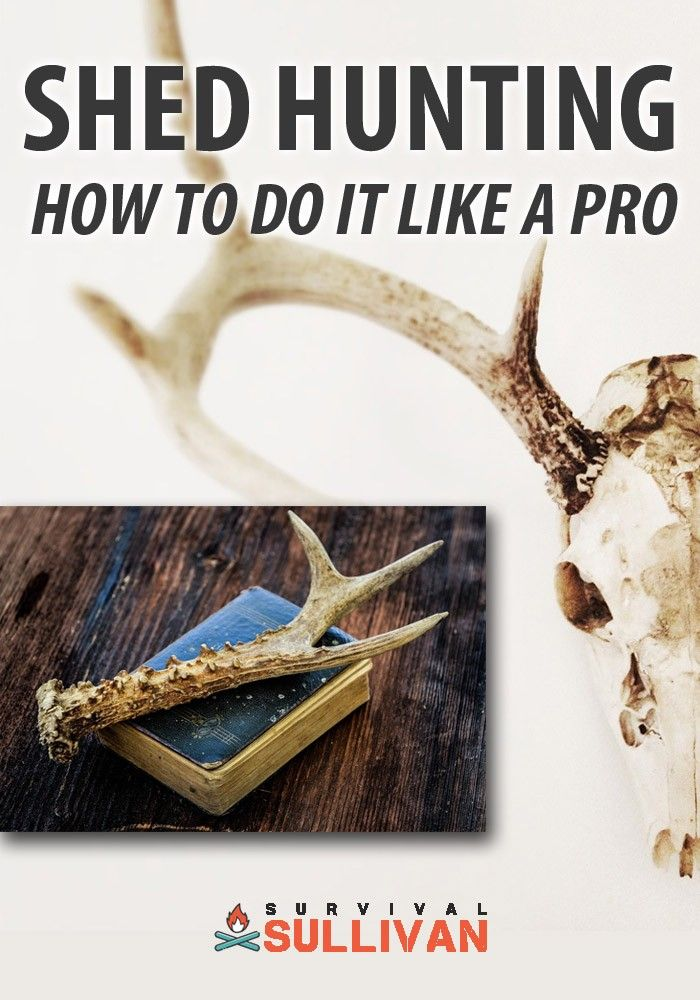 Shed Searching: Easy methods to Do It Like a Professional