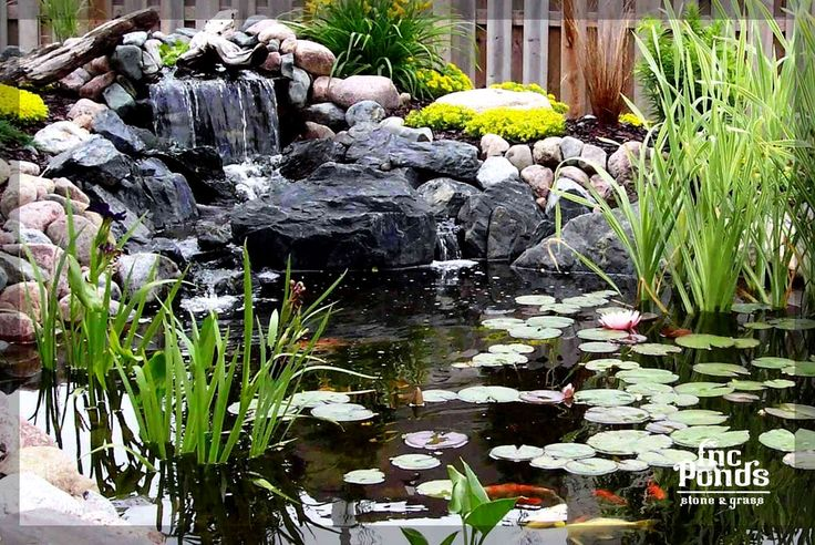 Pond Waterfall - koi - this one would be perfect.  Good size, good plants, good height waterfall