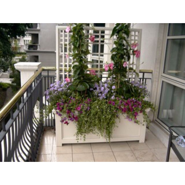 174 best images about Urban Garden | Balcony on Pinterest