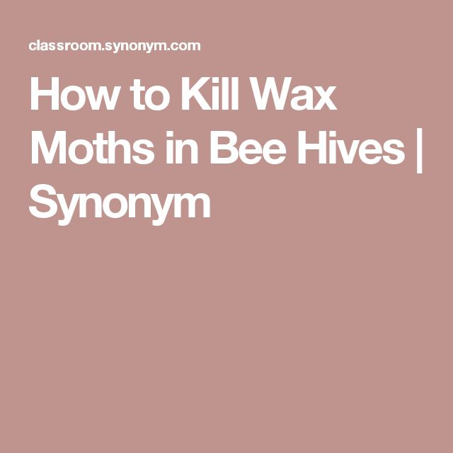 How to Kill Wax Moths in Bee Hives | Synonym #beekeepinggrants