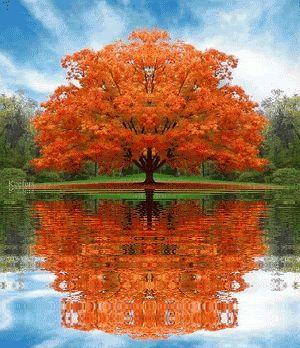 Prachtvoller Baum im Herbst