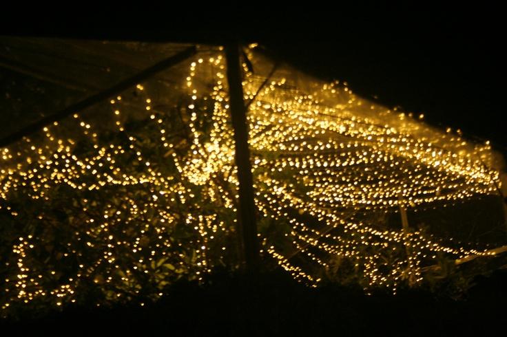 Hundred line of fairy light set up on Pullman Resorts..just contact dekor indonesia http://www.dekorindonesia.com