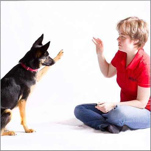 Clickertraining ist nicht nur für professionelle Tiertrainer. Wir zeigen einfache Übungen mit denen Sie Ihren Hund vor spannende Herausforderungen stellen!