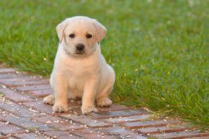 Doggie Ettiquette | Stretcher.com - Developing a child-friendly dog