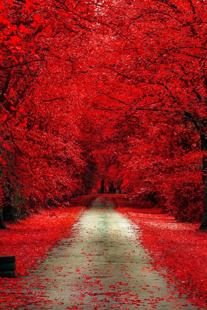 aguysmind: Autumn Bloody by Dominik Marciszewski | Source | AGM
