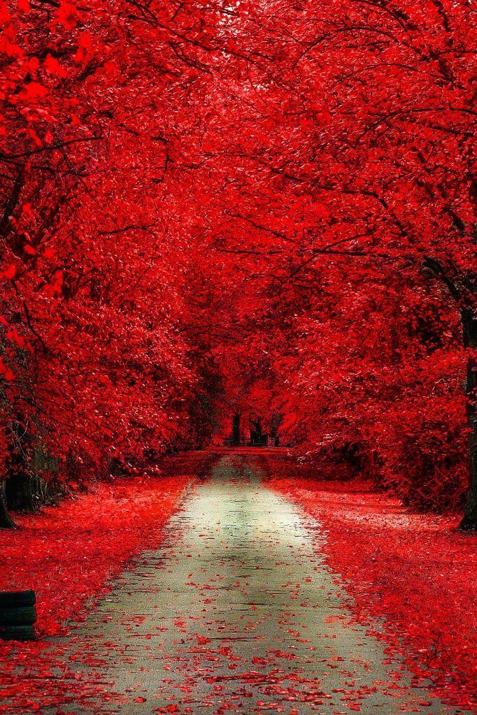 aguysmind:  Autumn Bloody by Dominik Marciszewski| Source| AGM