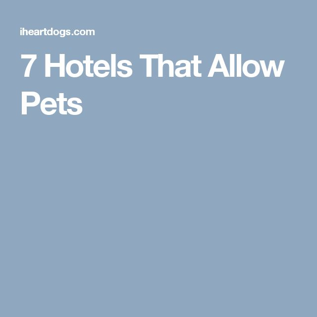 7 Hotels That Allow Pets