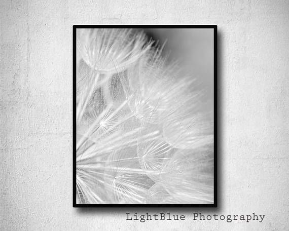Dandelion Print Nature Photography Gray Dandelion Photography