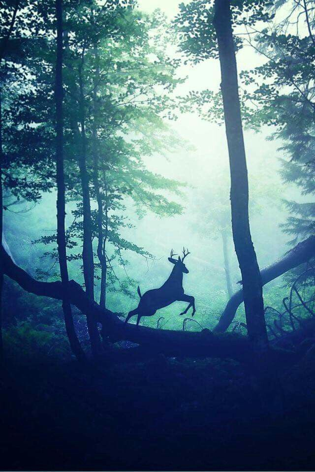 Beautiful leaping stag