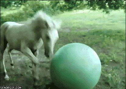 15 GIFs of Animals Who Don't Know What the Hell Just Happened from GifGuide
