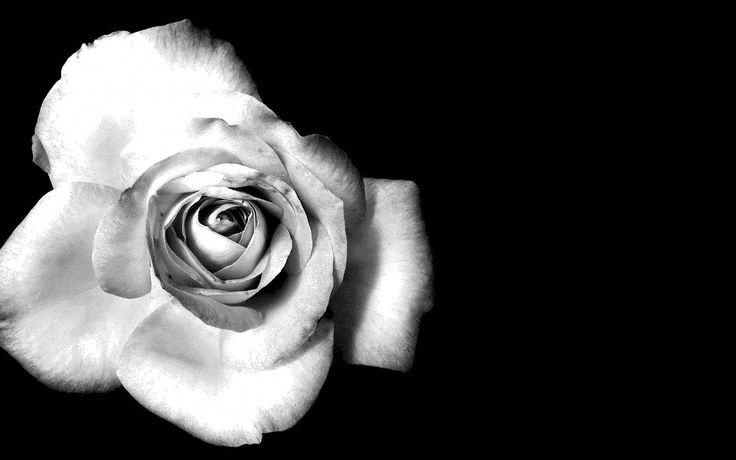 black and white flower photography tumblr - Google Search