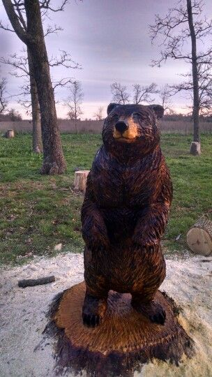 Tall maple tree black bear this was a stump job