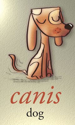 canis (in Latin) = dog