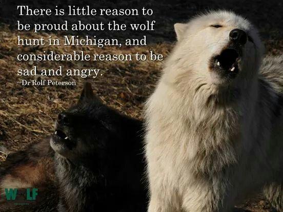 Stop hunting animals