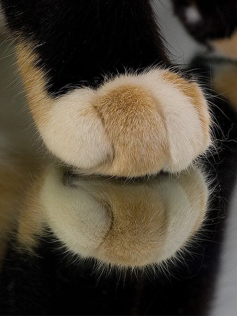 like your paws~