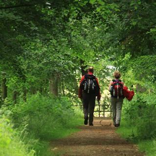 Een afwisselende route met zowel bos, dorpjes, historische steden als rivierlandschap, de NS-wandeling Wezepsche Heide - Zwolle