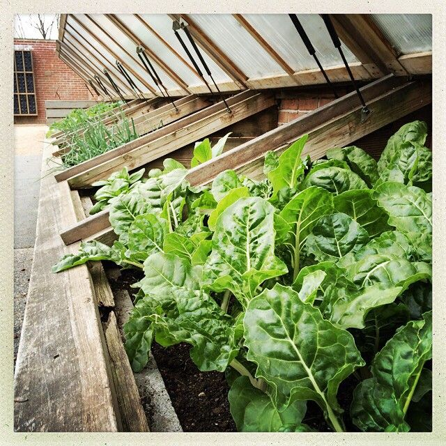 By Passthepistil | Digging these cold frames and that chard. Amazing. On the must-make list. #gardenchat #Garden365