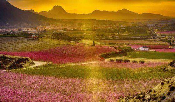 floracion cieza