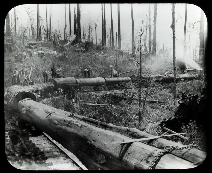 "John Watt Beattie, 1859 - 1930. Photographer. ""Log train, Geeveston forest"". www.trove.nla.gov.au"