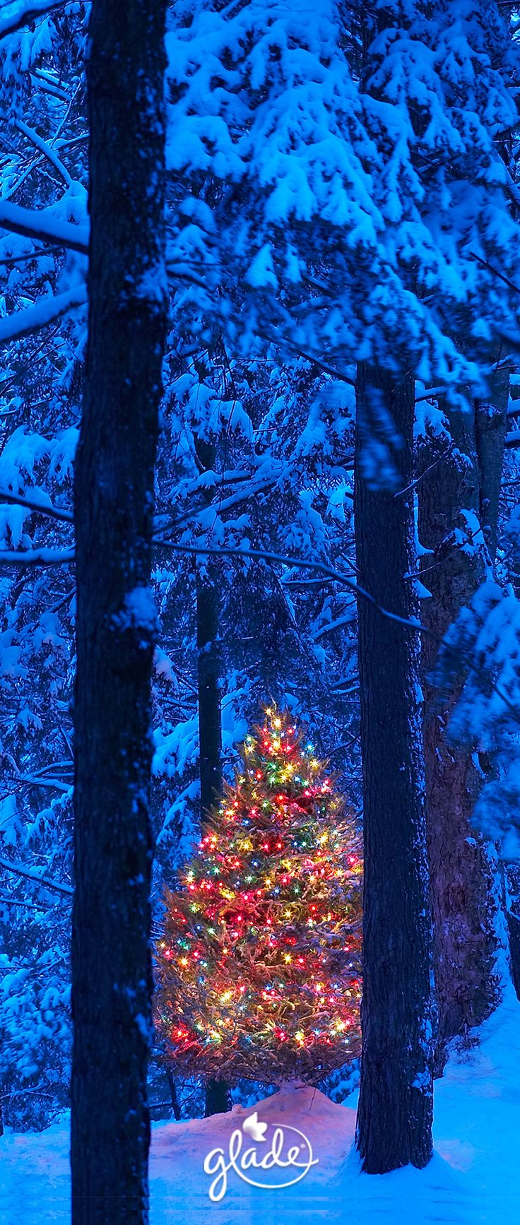 Across a path of freshly fallen snow within a circle of pine trees, waits a lit up tree waiting to be discovered for the first time. Uncover all the joyfulness the holiday season can bring with our Be at Peace scent from our limited edition Winter Collection. Feel Joy. Feel Glade.