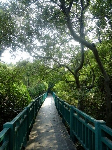 Mangrove park nourt jakarta.