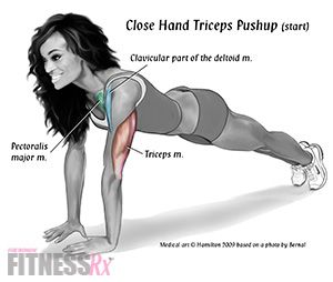 Image result for triceps exaggerated