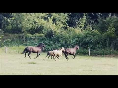 Ekofarma Jalový dvůr u Brna | Farmy, ZOO, jízdy na koních