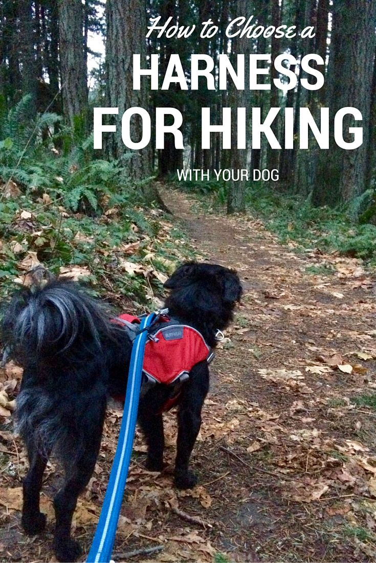 best hiking with dogs images on pinterest dogs camping dogs