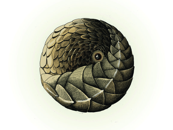 Hand drawn Pangolin ball. Printable up to A2 in size. Downloadable from Etsy.com