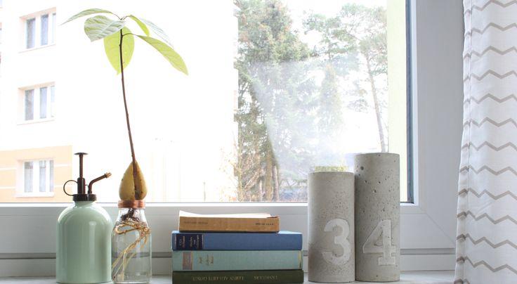 Hallo Piepmatz! Avocado Kern einpflanzen und einen Avocadobaum selber ziehen…