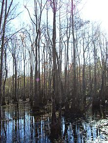 Red Creek Wildlife Management Area was established from land owned by the U.S. Forest Service and is located within the De Soto National Forest off Mississippi Highway 15. Description from snipview.com. I searched for this on bing.com/images