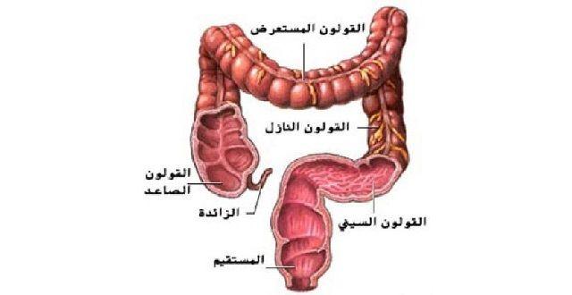ما هو مرض القولون و ما هي أسباب الإصابة به رحيق Statement Necklace Blog Blog Posts