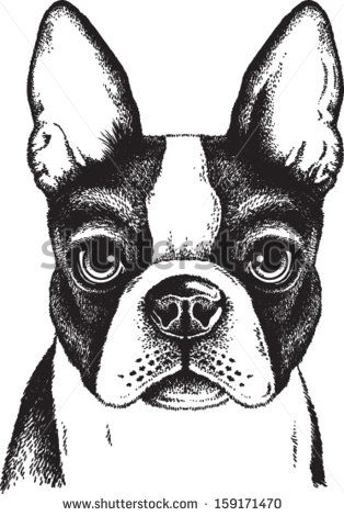 sitting boston terrier silhouette - Yahoo Search Results Yahoo Image Search Results