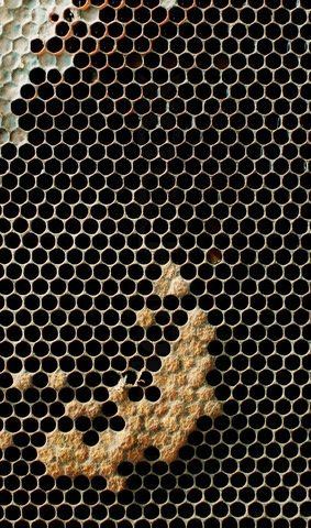 Natural texture of honey comb with wax. I know they are sextons but close enough to circles and the pattern is so beautiful