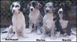 my puppy! the middle two!